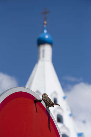 Sparrow on a traffic sign against a chapel. photo