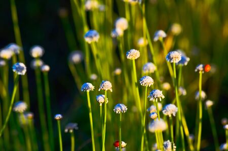 xwhite: Flowers background animal