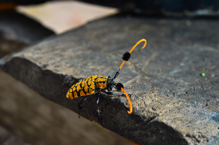 poisonous insect: animal insect Stock Photo