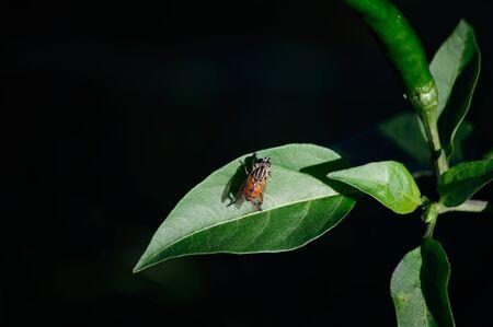 recluse: recluse Stock Photo