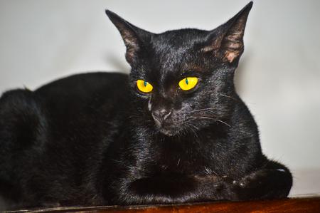 ?black cat Stock Photo