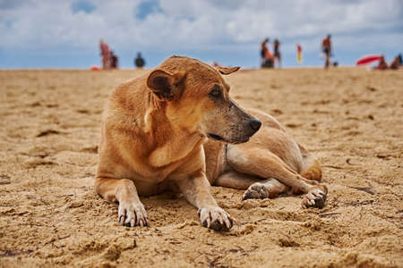 Stray dog on the beach in thailand 2018 Stock Photo