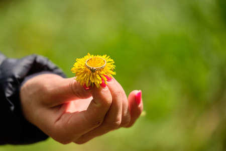 Golden ring on a dandelion in the girls hand 2019