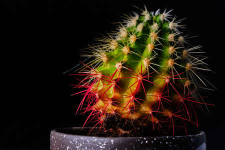 Cactus on a black background in drops of water 2019 Stock Photo