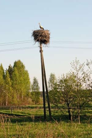 Storks nest on a pole