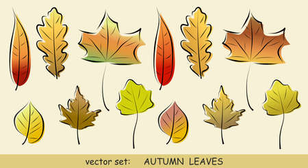 sycamore leaf: Vector set of various autumn leaves for gesign