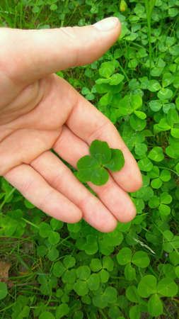 Green four leaf clover on a hand. Lucky clover. Make a wish. Top view