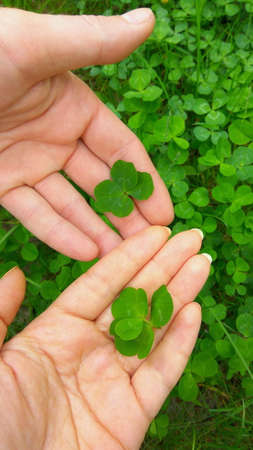 Green four leaf clovers in hands. Man and woman found lucky clover leaves. Make a wish. Happy Saint Patricks day