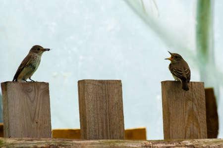 alimony: birds alimony