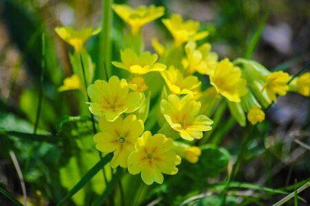 amaranthine: wildflowers Stock Photo