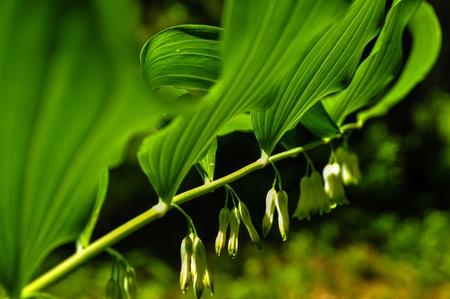 offshoot: flower