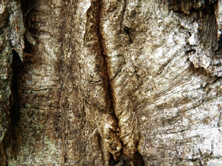 cortex: bark, cortex, cork