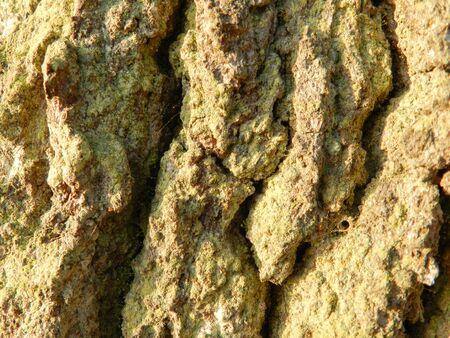 removals: bark, cortex, cork
