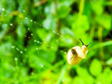 depravity: young snail wanders the spider s web