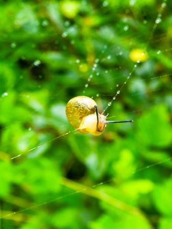 young snail wanders the spider s web