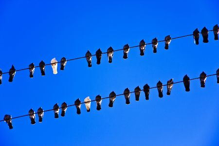 picture of the pigeons sitting on the electric lines Stock Photo