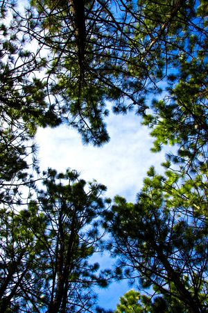 The Heart in the sky through the trees