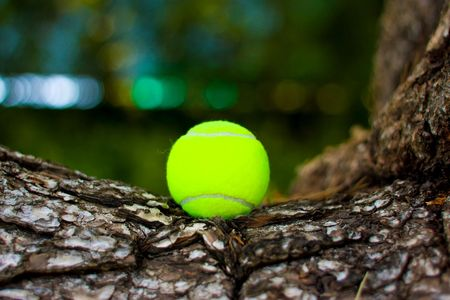 Pucture of a tennis ball on a tree