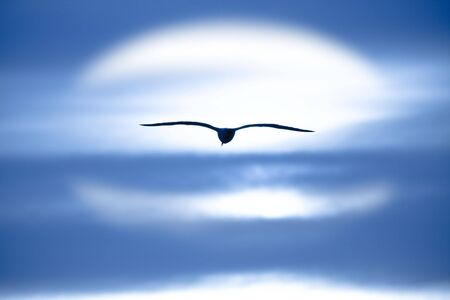 Picture of a bird flying to the sun