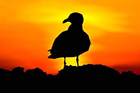 Black bird silhouette on the sunset background