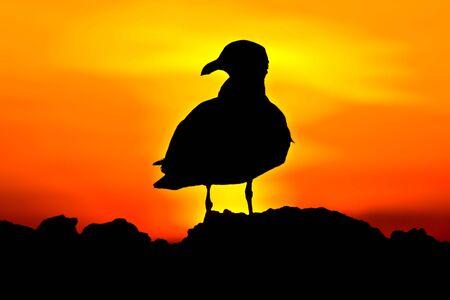 Black bird silhouette on the sunset background