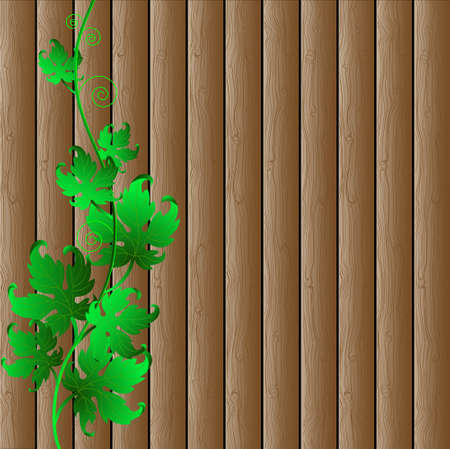 dewy: Wooden background with decorative grape vine.Eco vector illustration