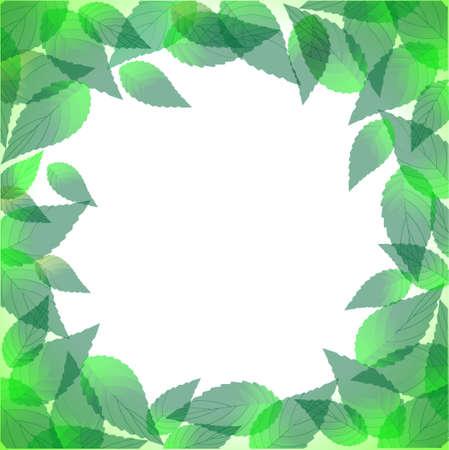 Fresh green leaves frame.Vector eps10 Stock Vector - 12030065