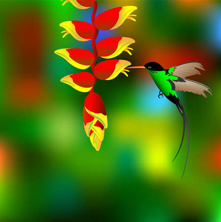 Flower with colibri. Vector