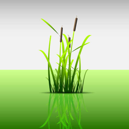 Eco concept.Grass green reed Stock Vector - 12072099