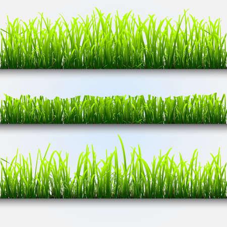 effortless: Cuatro diferentes tipos de hierba verde para design.Vector eps10