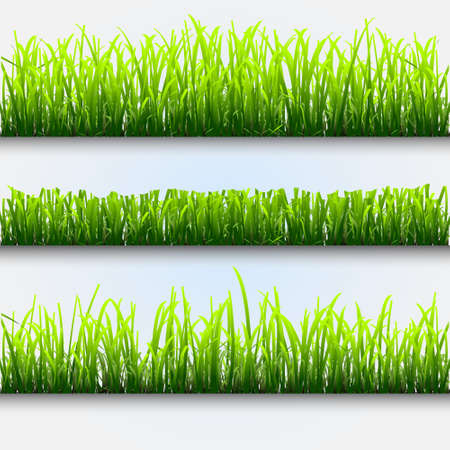 Four different types of green grass for design.Vector eps10 Vector