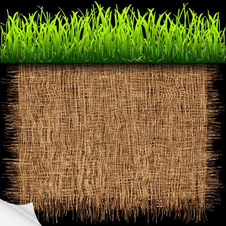 Eco background with green grass.Vector eps10 Vector