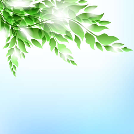 Branch with leaves.Summer vector background Stock Vector - 12493932