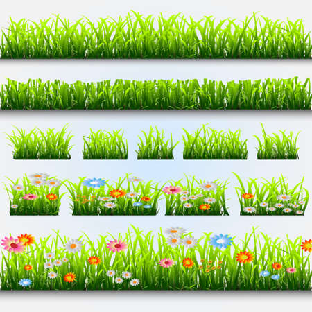 daisyflower: Grass and flowers.Vector collection Illustration