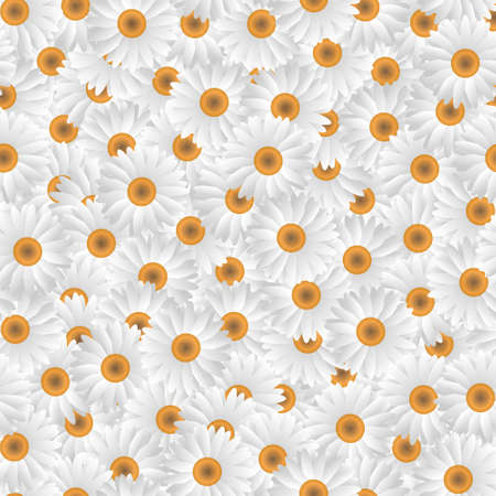 Seamless pattern of white camomiles.Vector eps10 Stock Vector - 12493937