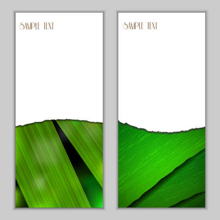 Fresh vertical seasonal banners with green leaf.Vector eps10 Stock Vector - 12825762