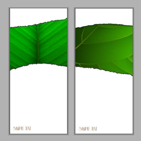 saturate: Vertical seasonal banners with green leaf .Vector eps10
