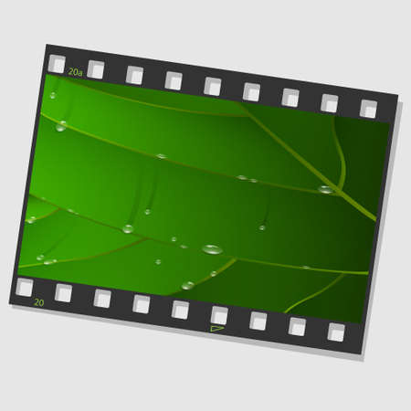 Film frame with green leaf and drops  Vector illustration Vector