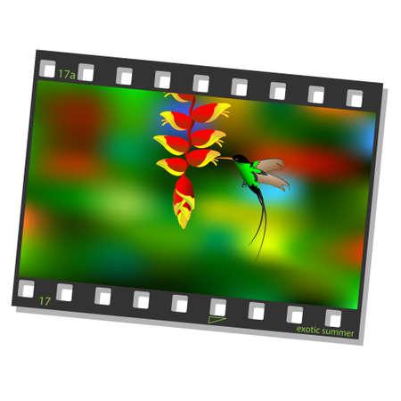 cinematografico: Cine marco con la ilustraci�n vectorial colibr� Vectores