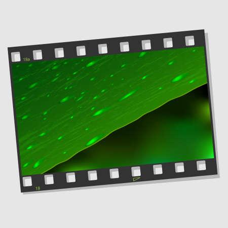 cinematografico: Film marco con hojas y gotas ilustraci�n vectorial Vectores