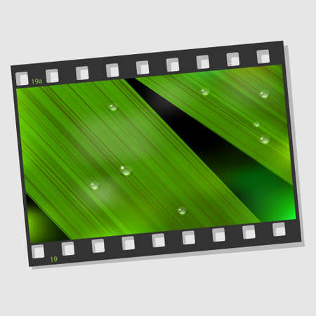Film frame with macro leaf and droplets  Vector illustration Vector