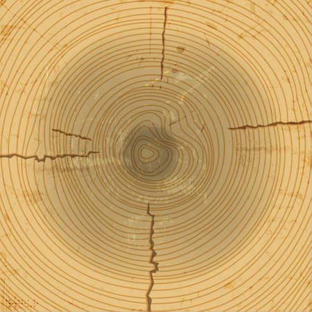 Wood cross section background  Stock Vector - 14370834