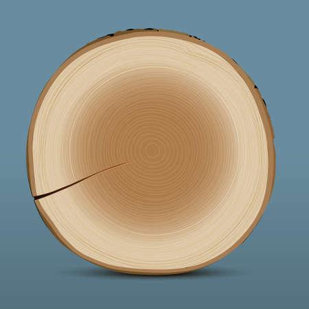Cross section of tree stump Stock Vector - 15491772