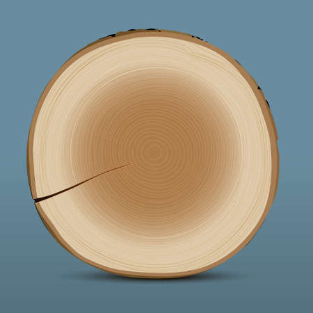 cross section of tree: Cross section of tree stump Illustration