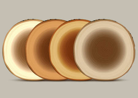 Various cross section of tree stump Vector