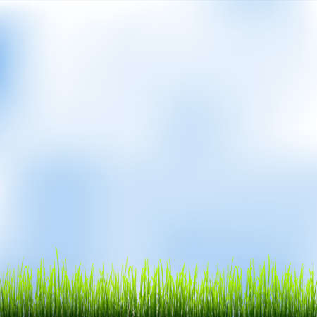 Green grass and blue sky. Vector illustration  Vector