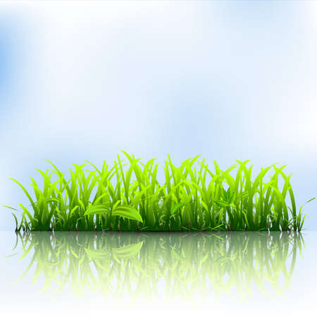 Green grass. Vector illustration Stock Vector - 17755136