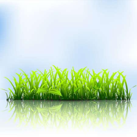 Hierba verde. Ilustración vectorial Foto de archivo - 17755136