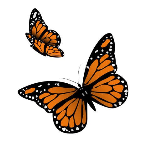 mariposas amarillas: Monarch Butterfly ilustración Vectores