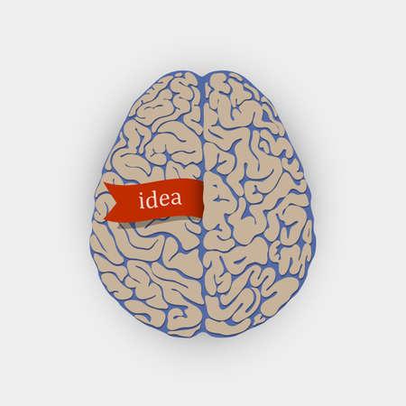 Creative illustration human brain  Illustration
